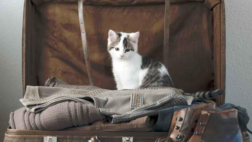 Voyager avec un chat : bon à savoir
