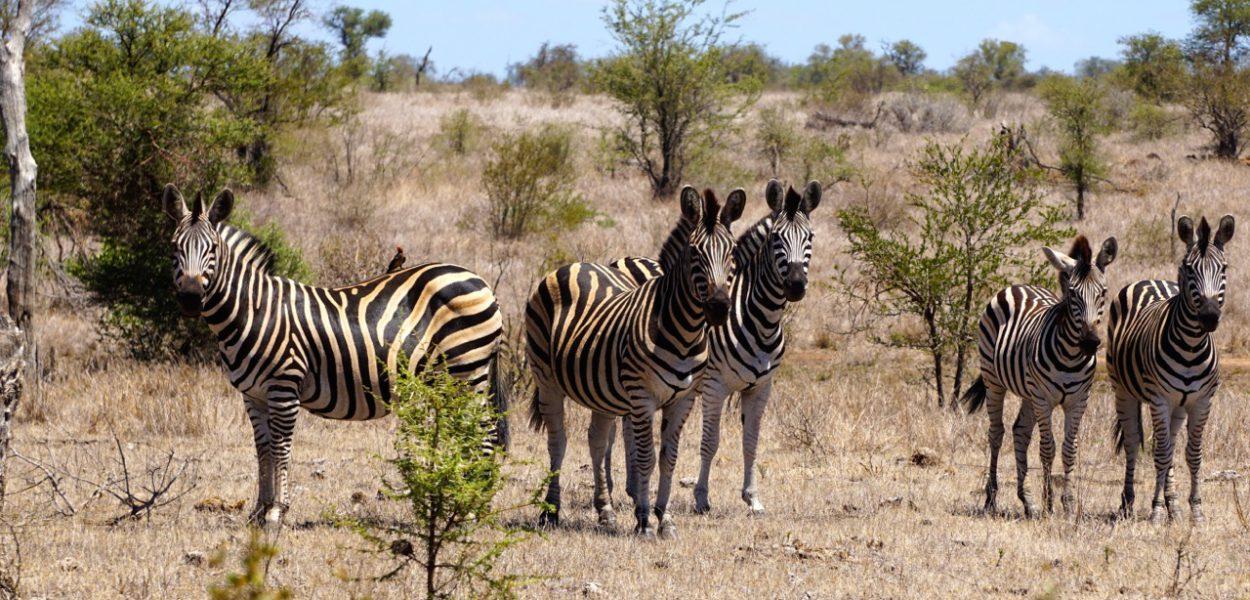 Conseils pour réussir son safari