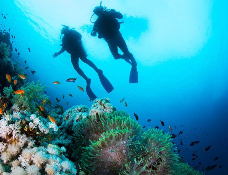 Notre sélection de meilleurs sites de plongée de la planète